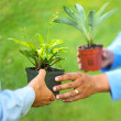 Photo of hands swapping plants